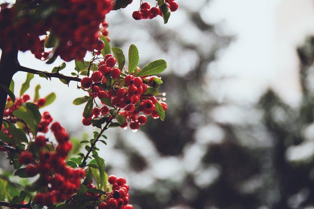 nature, branch, december